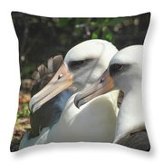 Albatross Lovers Throw Pillow