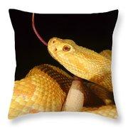 Albino Brazilian Rattlesnake Throw Pillow