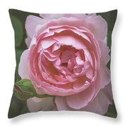 Alnwick Rose 1830 Throw Pillow