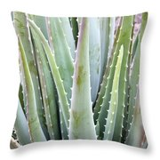 Aloe Vera Plant Throw Pillow