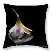 Alstroemeria Blossom Throw Pillow