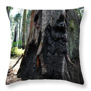 Alta Vista Giant Sequoia Throw Pillow