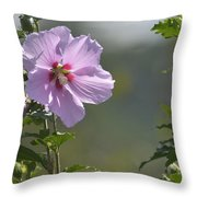 Althea Rose Of Sharon Hibiscus Bloom Throw Pillow