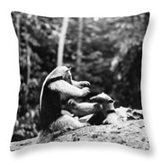 Amazon: Anteater Throw Pillow