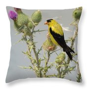 American Goldfinch Throw Pillow