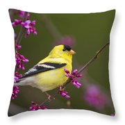 American Goldfinch In Redbud Throw Pillow
