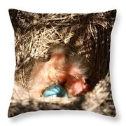 American Robin Nestlings Throw Pillow