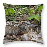 American Woodcock Chick Throw Pillow