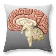 Anatomy Of The Brain, Illustration Throw Pillow