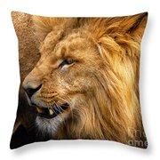 Angolian Lion Throw Pillow