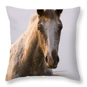 Appaloosa Horse Throw Pillow
