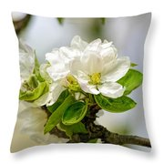 Apple Tree Flowers Throw Pillow
