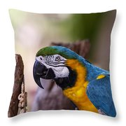 Ara Parrot Throw Pillow