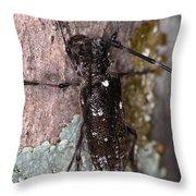 Asian Long-horned Beetle Throw Pillow