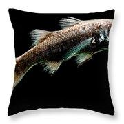 Atlantic Pelagic Basslet Throw Pillow