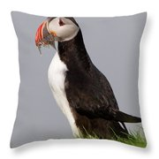 Atlantic Puffin Throw Pillow