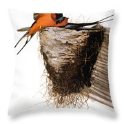 Audubon: Swallow Throw Pillow