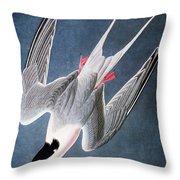 Audubon: Tern Throw Pillow