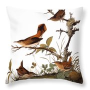 Audubon: Wren Throw Pillow