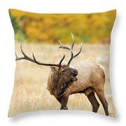 Autumn Bull Elk Bugling Throw Pillow