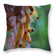 Baby Praying Mantises Throw Pillow