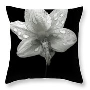 Backside Daffodil Dew Throw Pillow