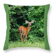 Backyard Deer Throw Pillow