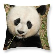 Bamboo Sticking Out Of The Mouth Of A Giant Panda Bear Throw Pillow