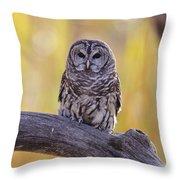 Barred Owl Throw Pillow