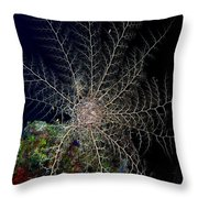 Basket Star Sponge Throw Pillow