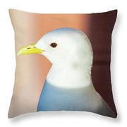 Bathed In Afternoon Light Throw Pillow