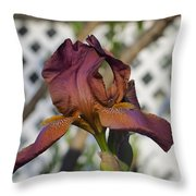 Beautiful Iris Throw Pillow