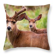 Beautiful Mule Deer Herd Throw Pillow