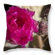Beavertail Cactus Blossom 2 Throw Pillow