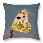 Becker's White Butterfly Throw Pillow