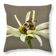Bee On Coneflower 2 Throw Pillow