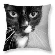Bella The Cat Throw Pillow by Danielle Allard