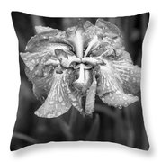 Bellevue Botanical Garden Iris 6402 Throw Pillow