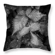 Bellevue Botanical Garden Leaves 6395 Throw Pillow
