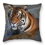 Bengal Tiger Laying In Water Throw Pillow