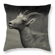 Big Horn Sheep Throw Pillow by Barbara Schultheis