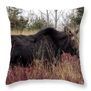 Big Mama Moose Throw Pillow