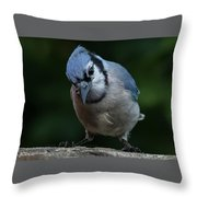 Birds From Heaven - Bluejay Throw Pillow
