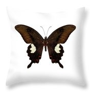 Black And Brown Butterfly Species Papilio Nephelus Throw Pillow