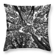 Black And White Nature Detail Throw Pillow