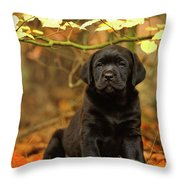 Black Labrador Retriever Puppy Throw Pillow