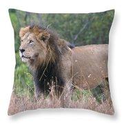 Black Maned Lion Throw Pillow