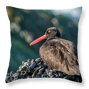 Black Oystercatcher Throw Pillow