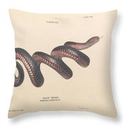 Black Snake, Pseudechis Porphyriacus Throw Pillow