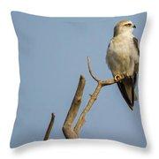 Black Winged Kite  Throw Pillow